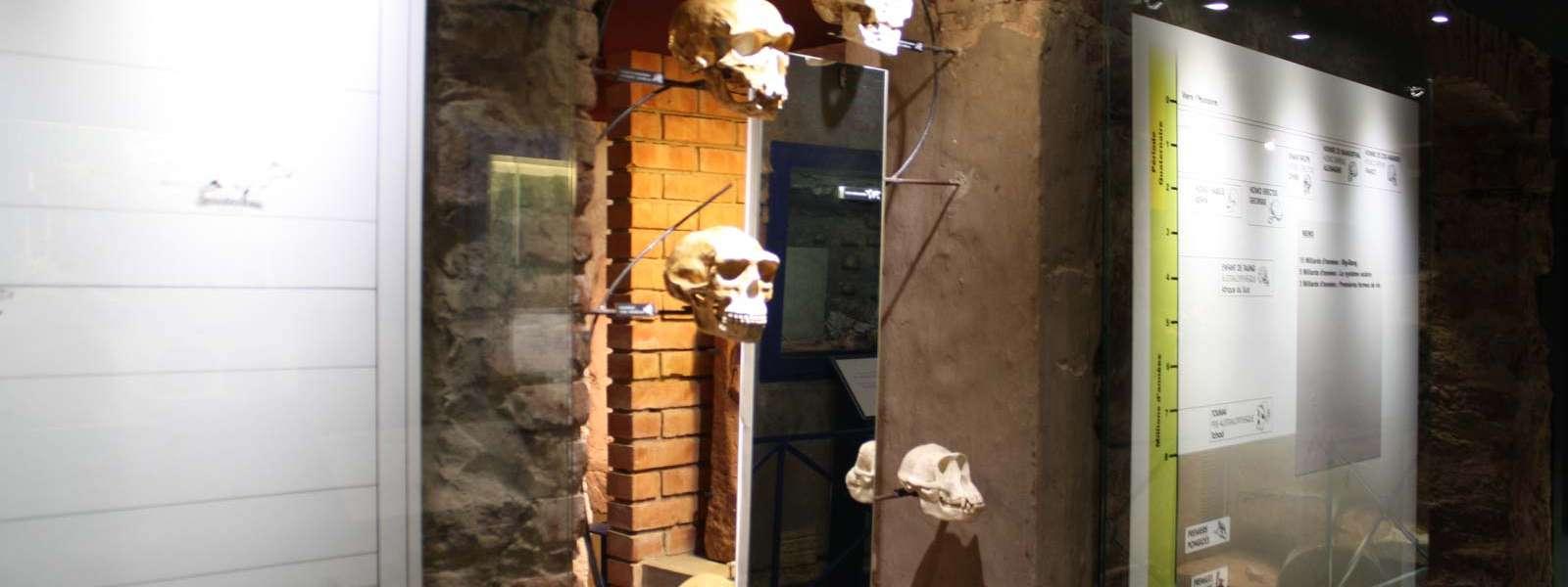 Maison de l'archéologie, section Préhistoire