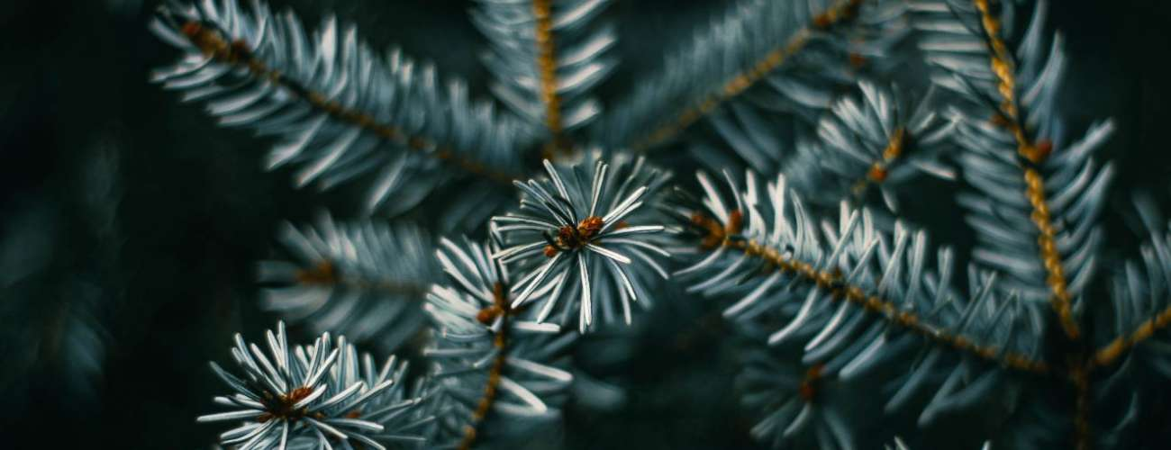 Recyclez votre sapin de Noël à Niederbronn-les-Bains