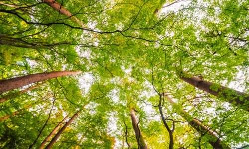 Circuit-découverte des arbres