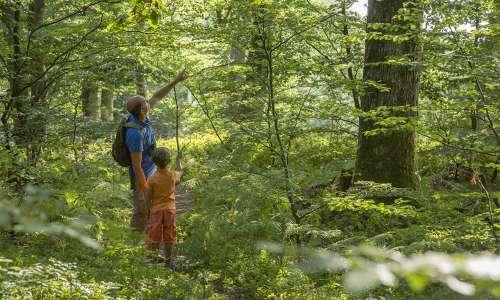 J'habite le Parc naturel régional des Vosges du Nord!