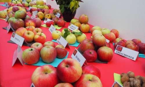 Exposition fruitière et cérémonie de fleurissement   1