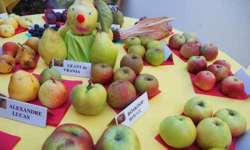Exposition fruitière et cérémonie de fleurissement   2