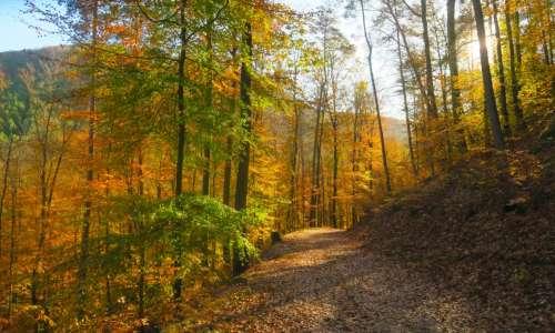 Dates des battues de chasse à Niederbronn-les-Bains et Reichshoffen