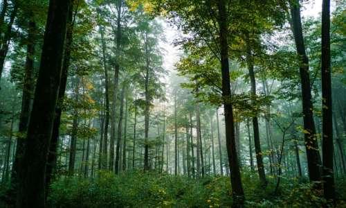 Forêt | Gare aux chenilles urticantes !