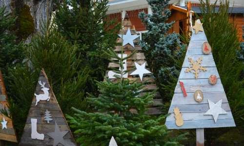 La commune prépare Noël et recherche... des petits sapins !