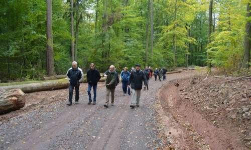 Sentier forestier entre Niederbronn et Reichshoffen
